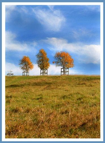 Little trees by naturenut
