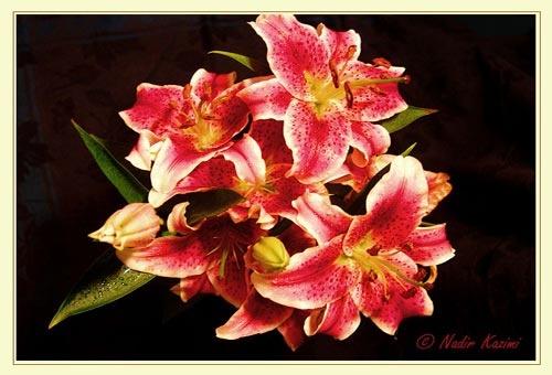 Flowers by logari