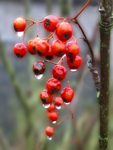 Wet Berries by helen&peter