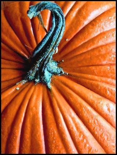 Fall Colours by kadisu