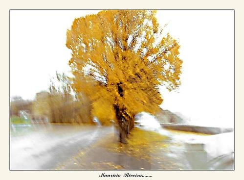 The summer is gone..... by Liveral