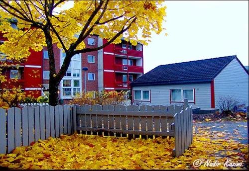 Autumn. by logari