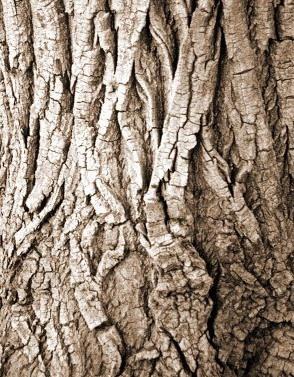 Dead tree by jmmd