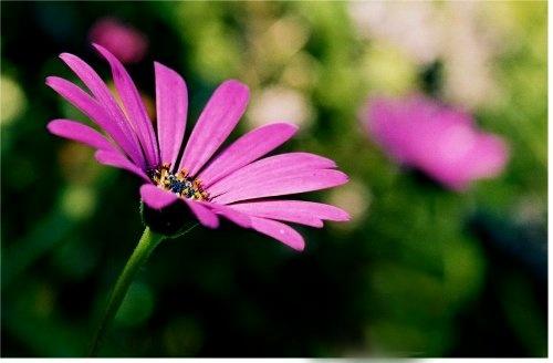 Flower by accystan