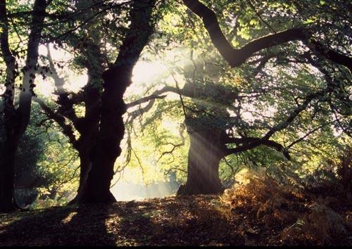 Morning Forest by inbibr