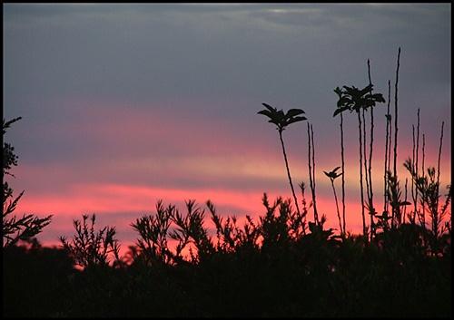 Toowoomba Sunset by dalowsons