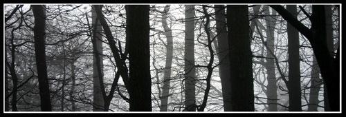 mist in trees by nj
