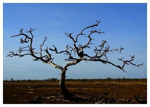 dead tree by joseluis