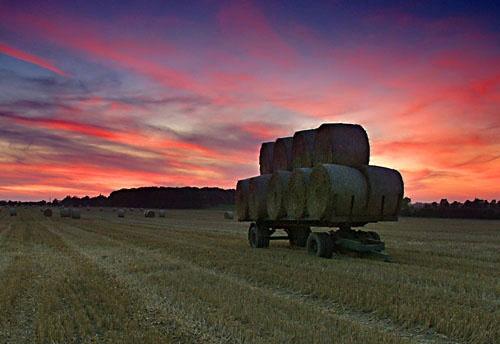 Harvest sunset by Rosie