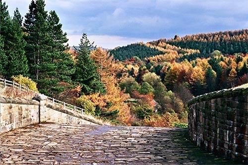 autumn by tva