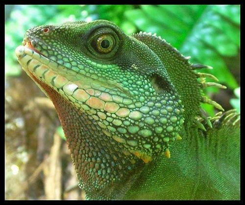 Jurassic Park by jon1169