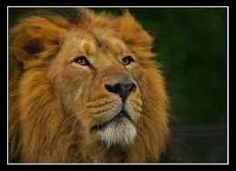 The King III