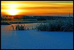 Golden morning...