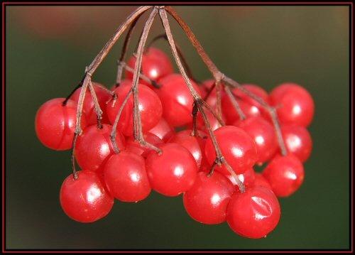 Berries by yidthekid