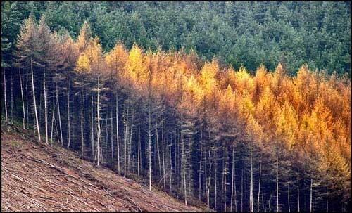 Ladybower Trees by tonyvizard
