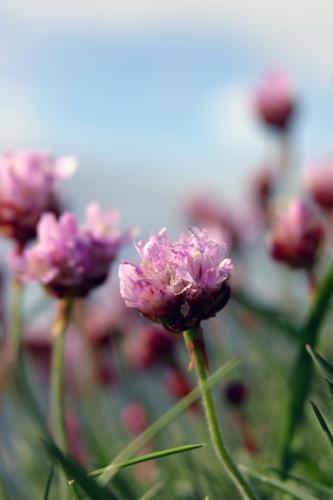 Purple Haze by dicko58