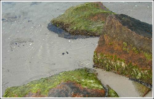 Rocks on the Beachfront by patrickfarrell