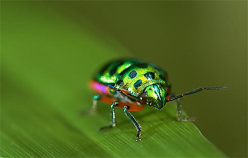 Bug\'s Life by suleesia