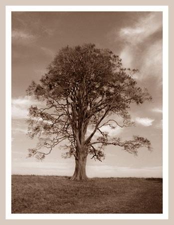 Tree by naturenut