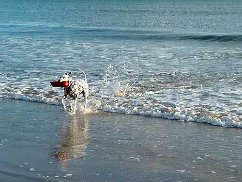 Fun at the beach! by corkonian