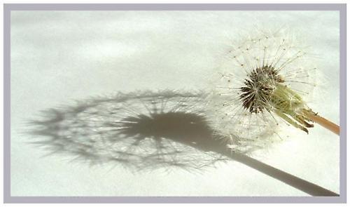 Dandy Shadow by delz