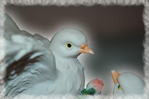Birdies by patrickfarrell