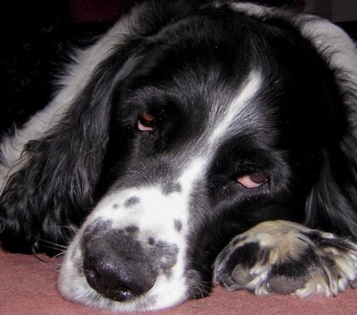 Dog Tired by jenny