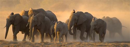 Elephant Dash by EOSPETE