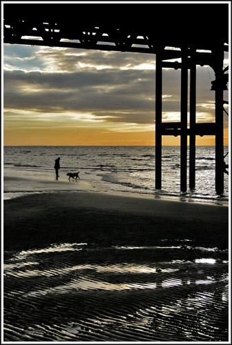 Salty Sea Dog. by MattHusala