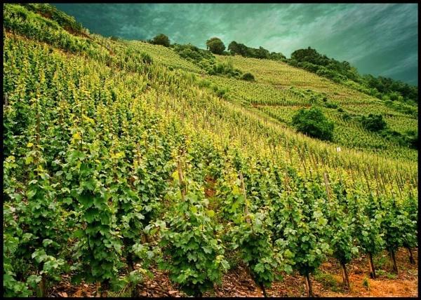 Green Landscape by ptilley