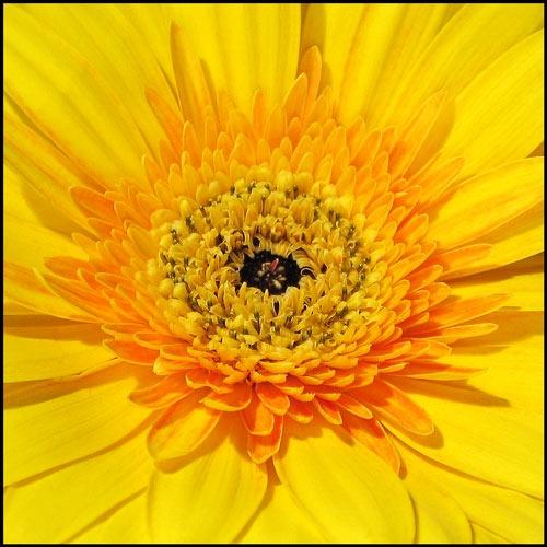 Yellow by ejtumman