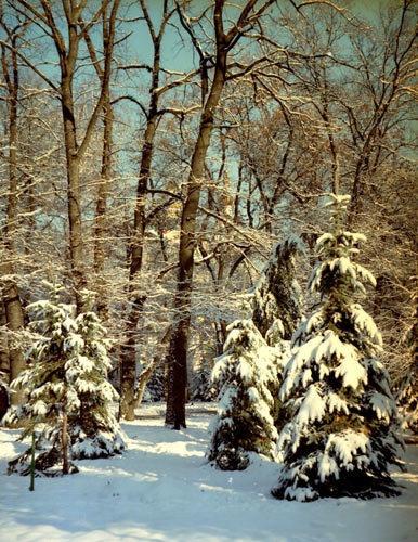Winter scene 2 by tudor