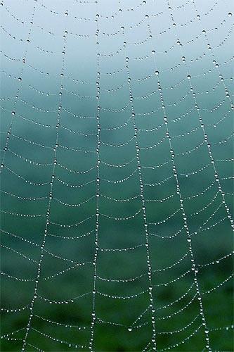 Web by victorburnside