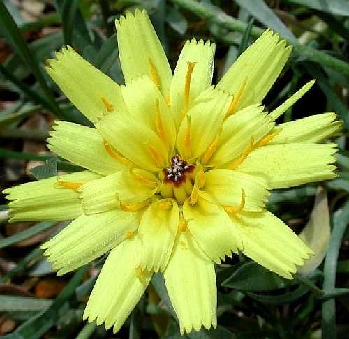 Yellow flower by emesef