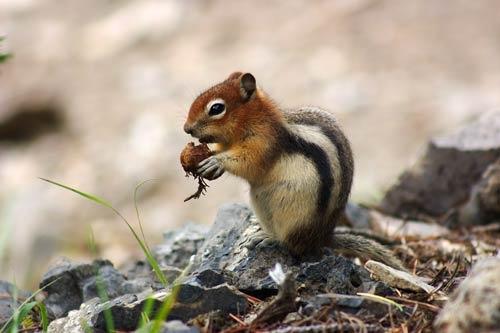Ahhh Nuts! by psiman