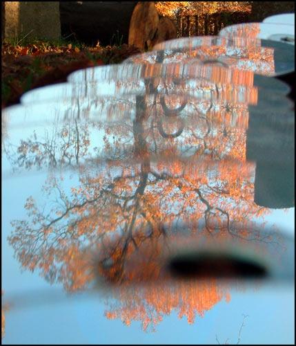 CD tree by alexball