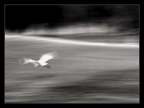 Flight by bradp