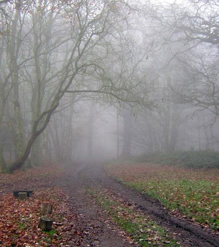 Misty Morn by jenny