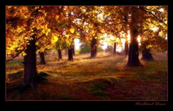 Woodland Dawn by johnc1711