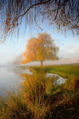 Weeping Willow by itsasetamendi