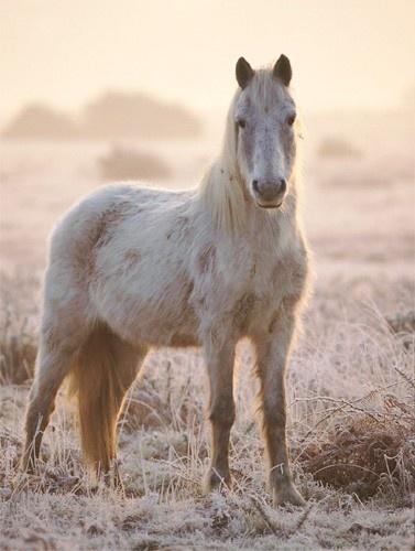 Winter Pony by kevan