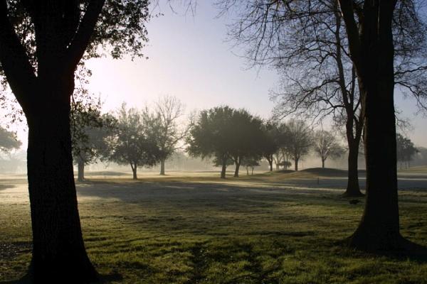 Morning  Mist by pgarwood