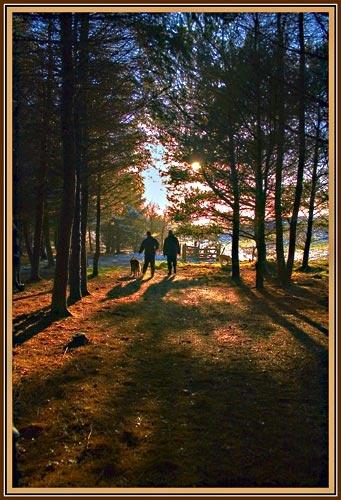 Strolling Shadows by MattHusala