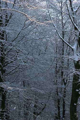 Winter Walk by samstan