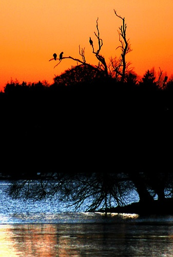 feathered silhouette by saggy9999