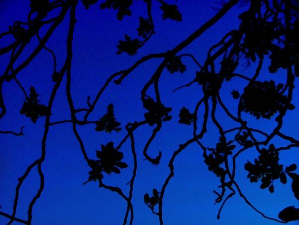 Blue by dalowsons