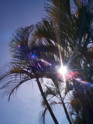 Afternoon shade by Hexadecimal
