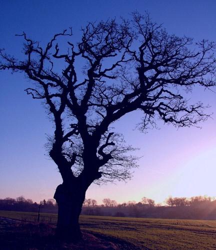 tree in black by alfsky