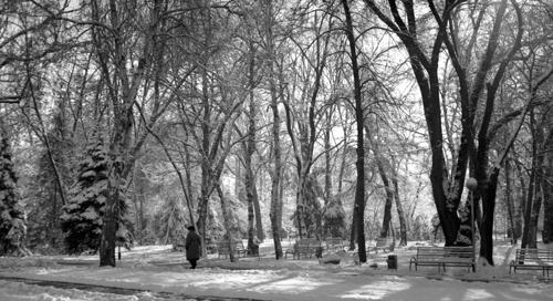 Winter morning BW by tudor