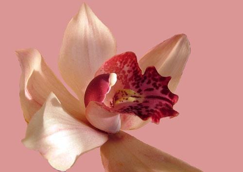 In the pink by leedewey